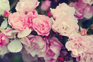 cvijeće