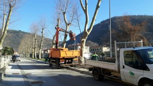 Orezivanje platana u Istarskoj ulici